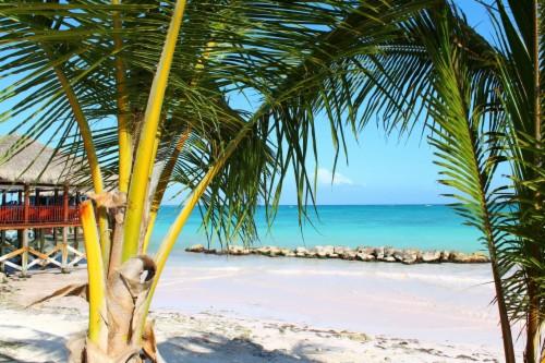 Surga Pasir Laut Laut Pohon Kelapa Tropis Pantai