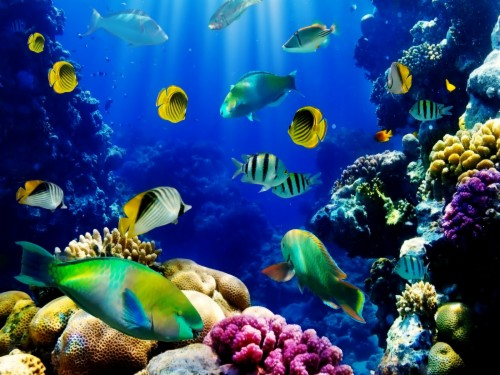 Download Aquarium Live Wallpaper For Pc Free Download