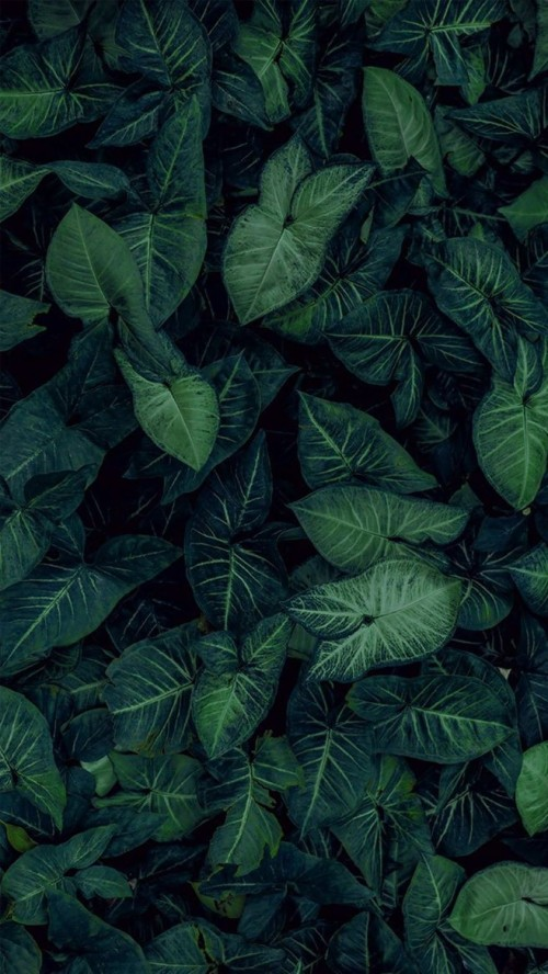 Nature Wallpaper Hd Iphone X Wallpapers Images On Full Hd