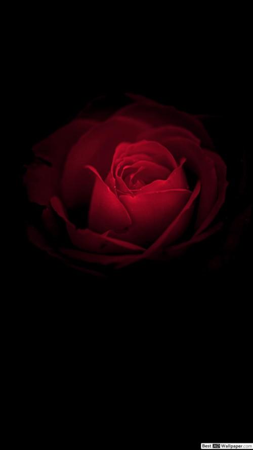 Apple Iphone 7 Plus Dark Phone Wallpaper Rose 877989 Hd Wallpaper Backgrounds Download