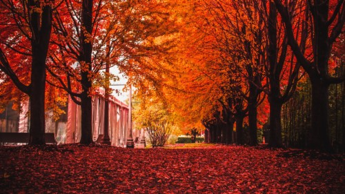 Road Autumn Nature View Fall Trees Background Iphone