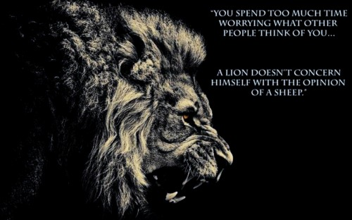 Lion Quote Lion Quotes Hd 949819 Hd Wallpaper Backgrounds Download