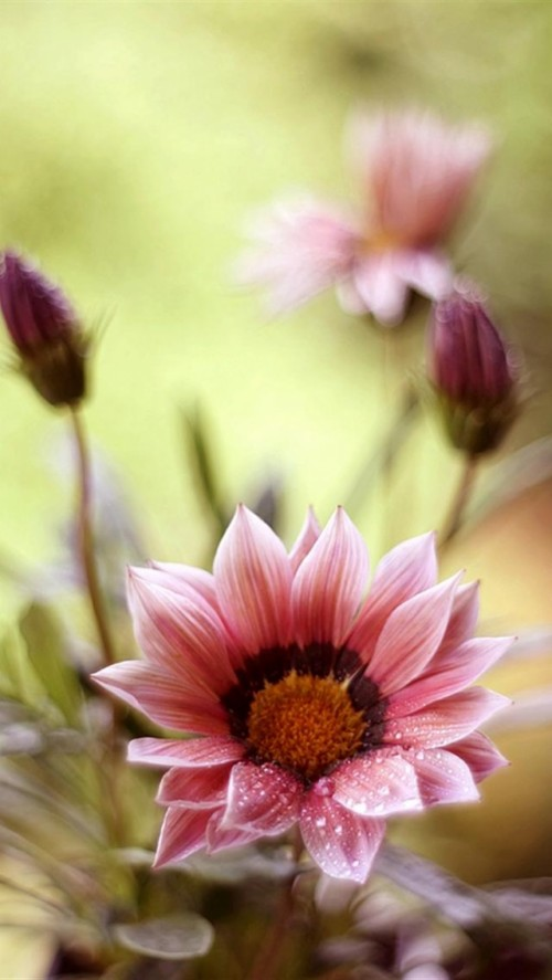 Iphone Wallpaper Tumblr Cute Pretty Girly Wallpapers